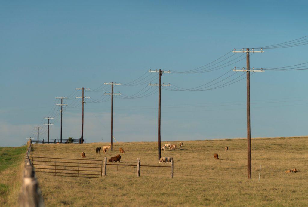Power Lines in Field
