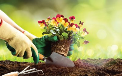 Before Planting May Flowers, Make a Call to Texas 811