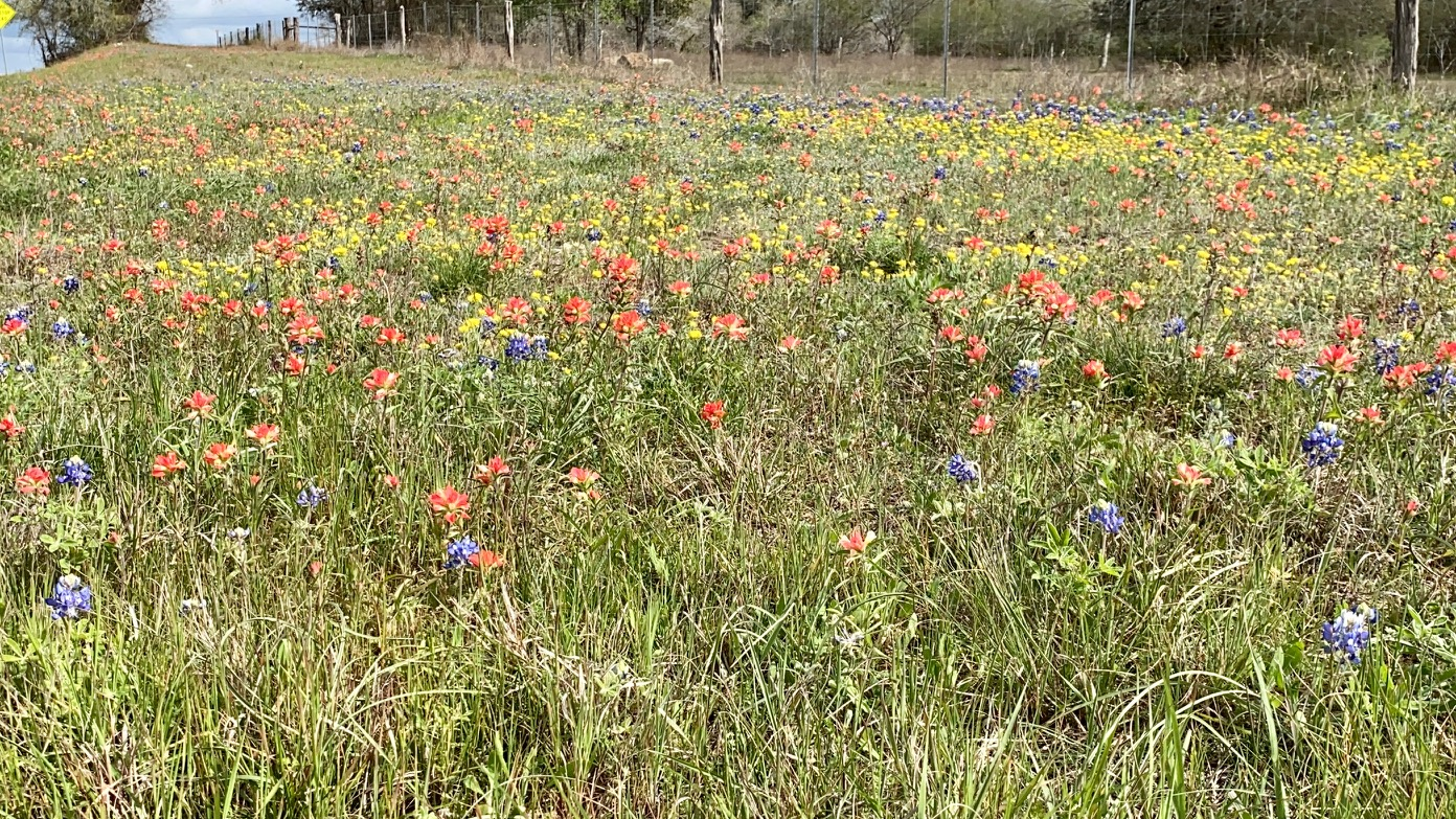Wildflowers along Highway 90 A from Gonzales to Shiner