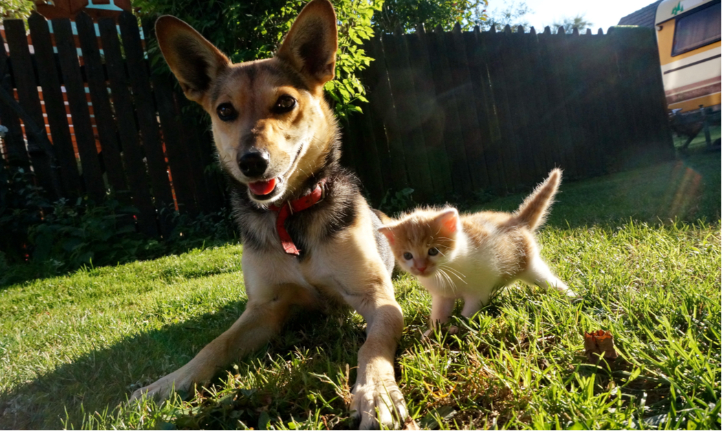 How to Spot Overheating in Cats and Dogs