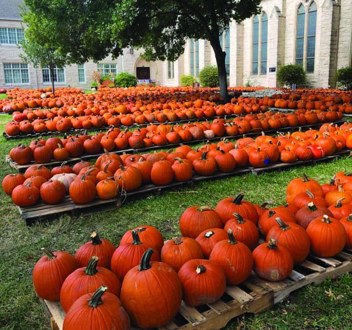 Pumpkins & Corn Stalks & Fun, Oh My!